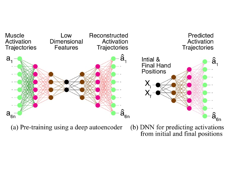 Prediction of muscle activations for reaching movements using deep neural networks